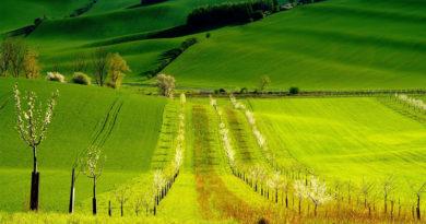 Експерти розповіли, скільки коштуватиме гектар землі після скасування мораторію