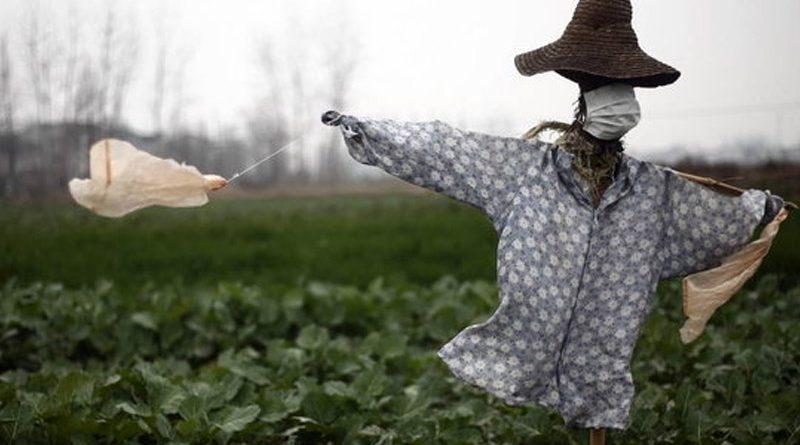 Коронавірус не є небезпекою для українського агроекспорту