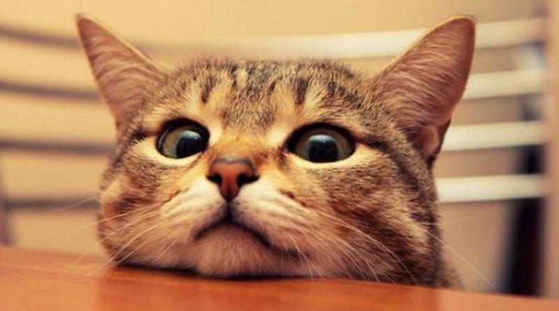 Ветеринари знайшли коронавірус у 15% котів